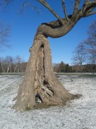 Fascinating tree 2