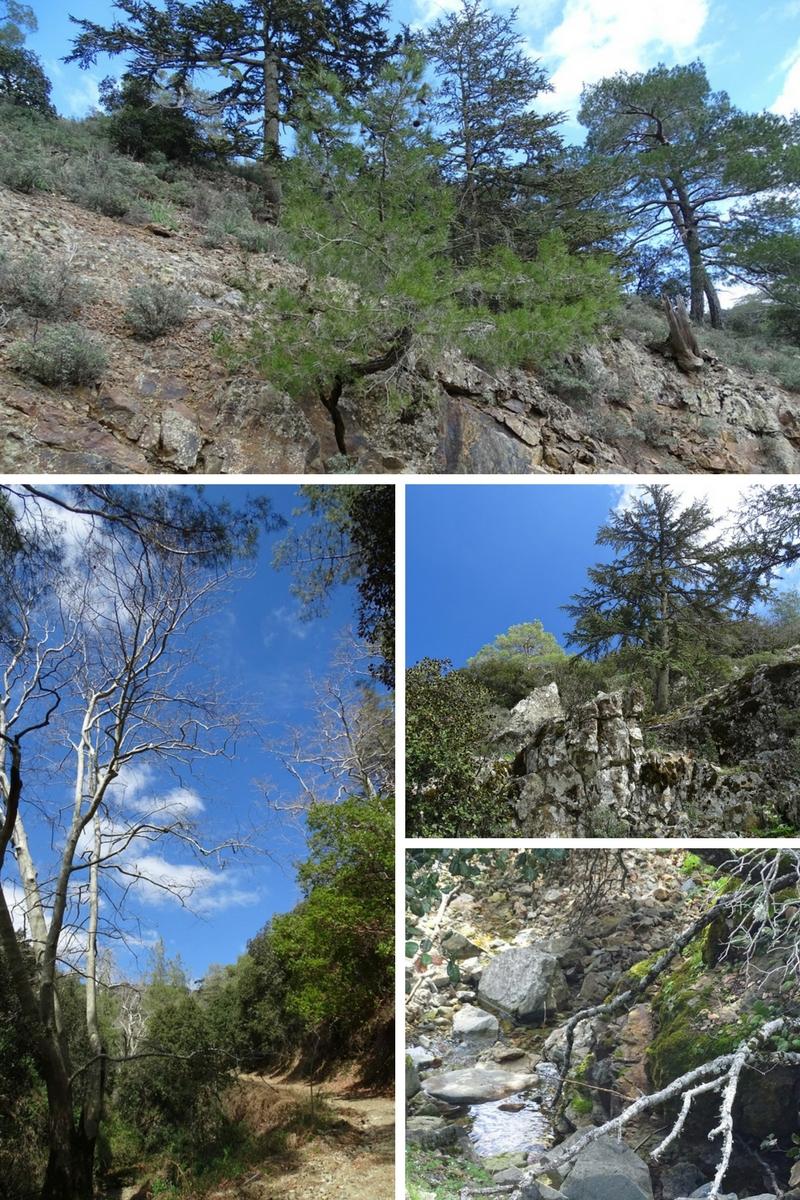 entrance to the cedar valley