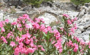 Stone bridge with oleanders