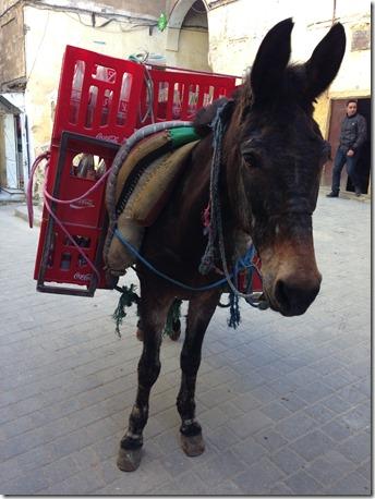 Moroccan Coke Donkey