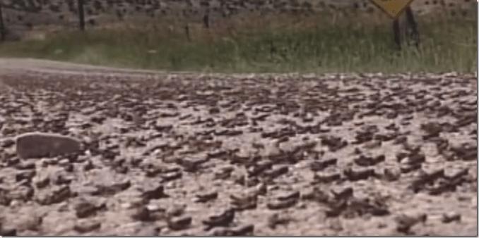 cricket swarm