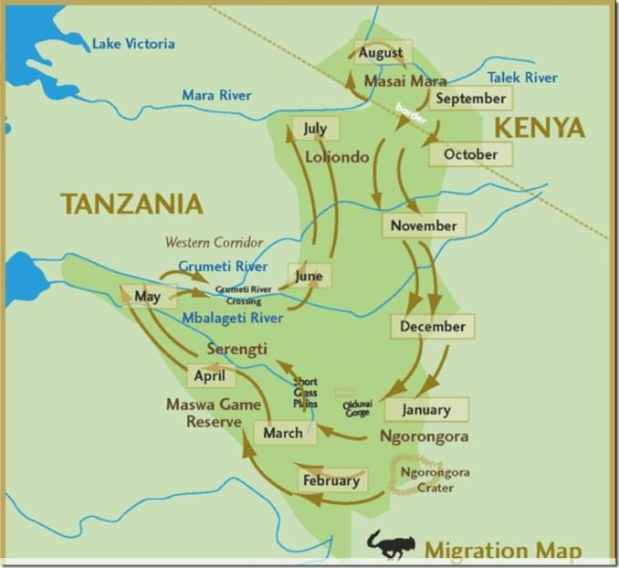 Wildebeest migration dates