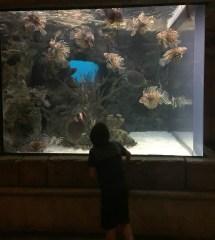 Shark Aquarium Mandalay Bay Las Vegas