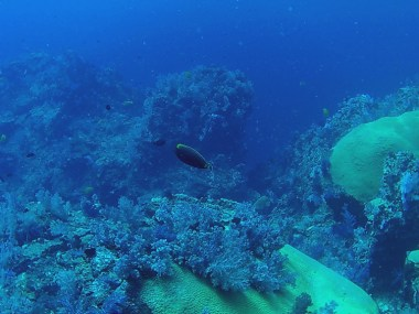 blue and green reef
