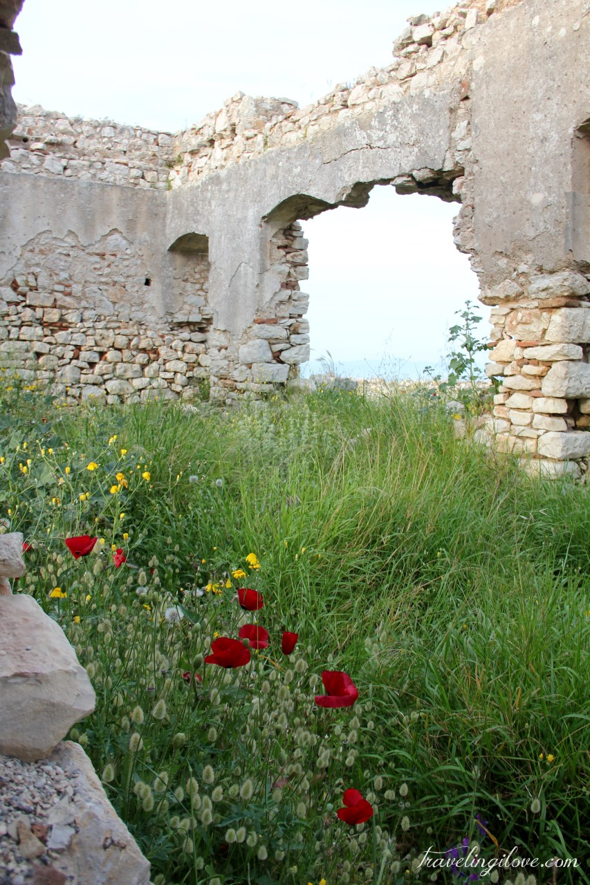 Ruins and poppies (5)