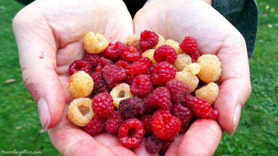 Polish raspberries