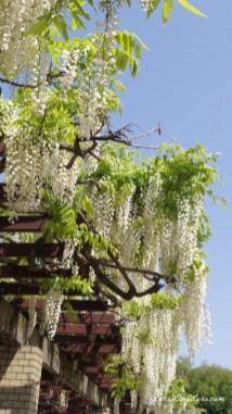 Jindai Botanical Garden