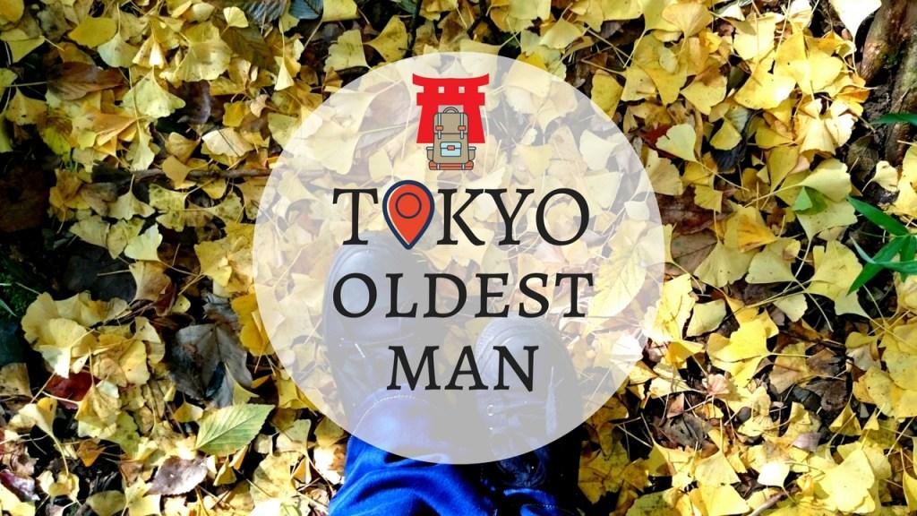 tokyo oldest gingko tree