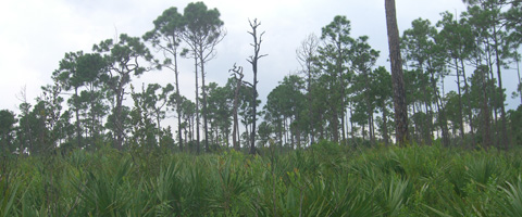 Royal Palm Beach Pines Natural Area