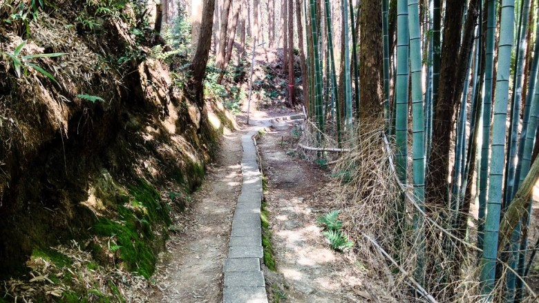 This was the trail that I walked along. The in-ground bricks are so narrow, it's much safer to not walk on them at all.