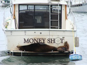 Sea Lions money shot