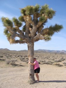 Traveling Marla hugging Joshua Tree