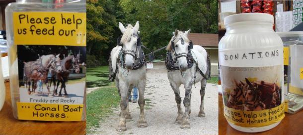 Canal boat horses