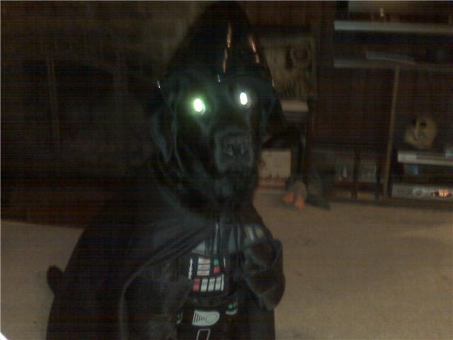 Halloween large dog costume black darth vader star wars
