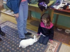 little girl feeding bunny