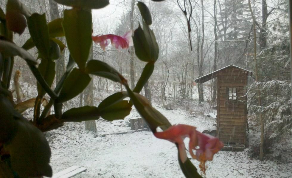 winter woods heavy wet snow