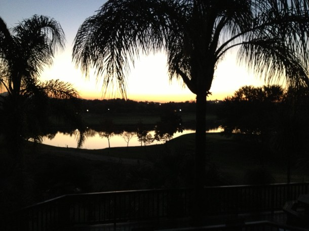 imported trees South Africa golf courses