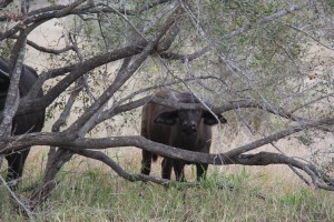 expat life Pretoria Africa travel where to see the big five in South Africa what are the big five