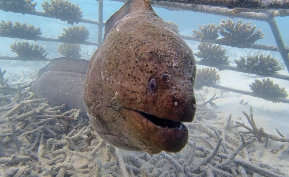 travel Indian Ocean eels