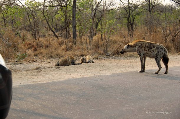 Kruger National Park travel South Africa expat life Pretoria