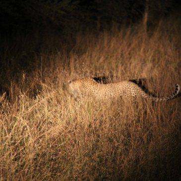 travel South Africa wildlife game drive