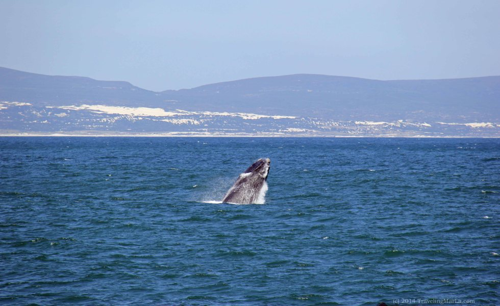 travel Africa Hermanus whales
