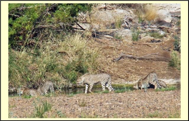 travel Africa cheetah