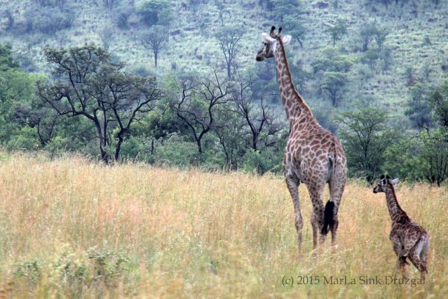 baby giraffe Africa travel craft kids