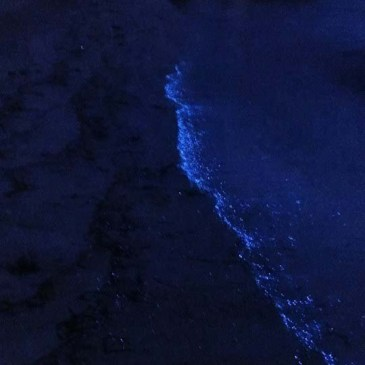 travel where to find bioluminescence