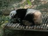 Panda28