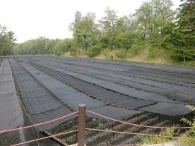Daio Wasabi farm10