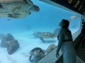 Churaumi - Turtle tank8