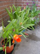 House Plants05