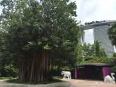 Indian heritage garden2