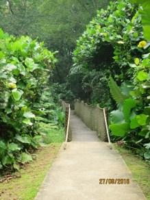 Mid Canopy walk2