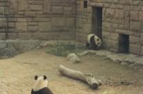 Beijing Zoo 15