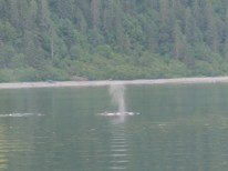 Day6-Whale Watch20