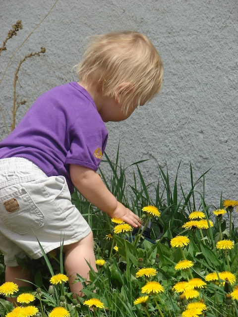 Anders in the dandelions