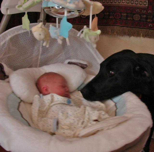Finn and Diesel