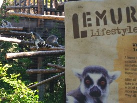 The Lemur House at the Safari Park for kids 6 and older.
