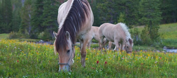 Back on the Horse: What It Means to be a Westerner