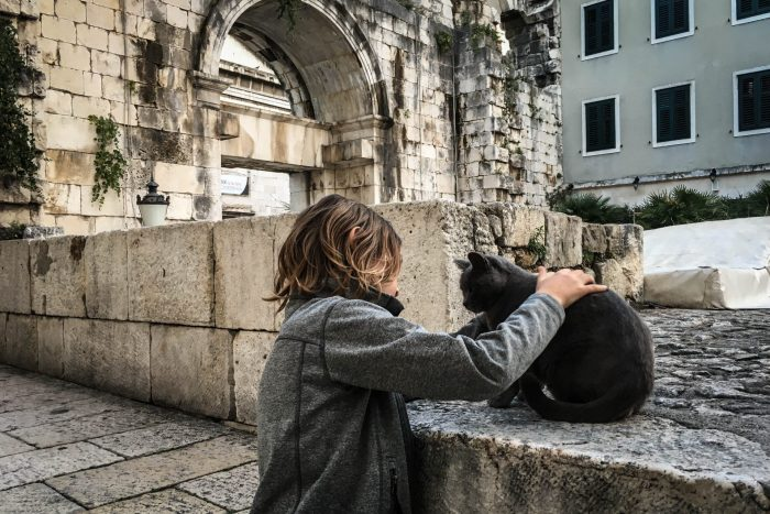cats of croatia what to do in hvar