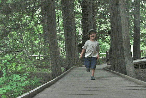 Trail of the cedars in Glacier National Park