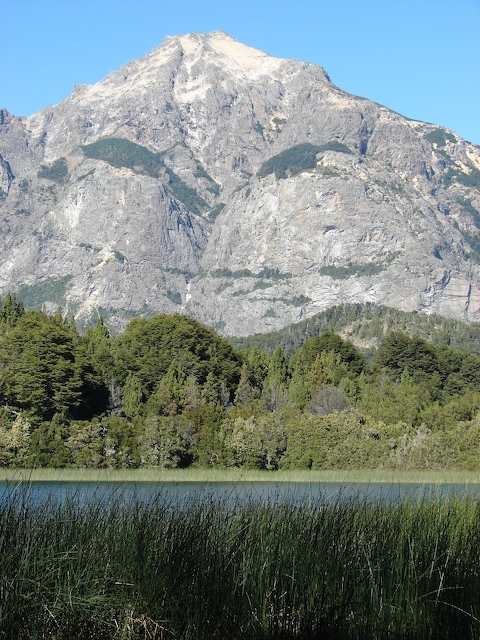 Reeds, lake, trees, mountain