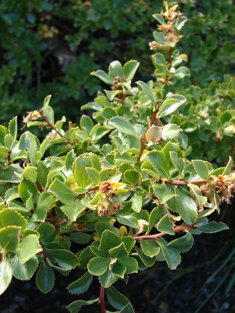 An interesting plant