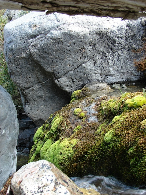 Moss covers a rock