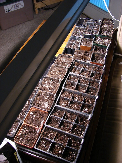 More sown seeds