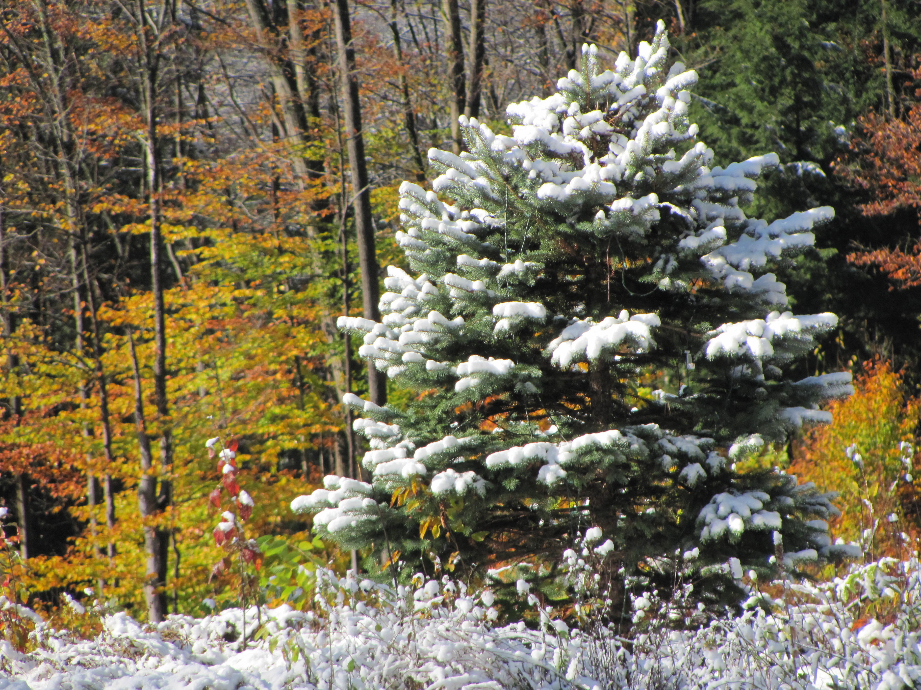 Vermont Fall Foliage Wallpaper An Autumn Snowfall Traveling Near Amp Far