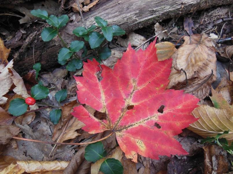 autumn mosaic 14