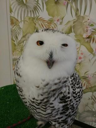 Hirosaki Owl Cafe